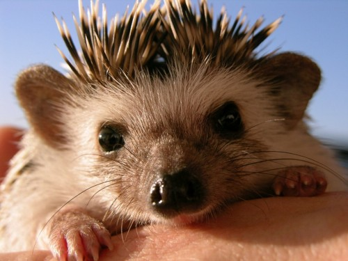 2004-3065franks-hedgehog.jpg