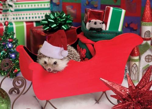 Christmas hedgehogs 6