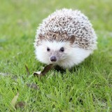 hedgehog-663638_1920